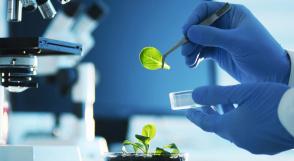 Agrobiotecnología: una opción ideal que hace frente a la demanda de alimentos