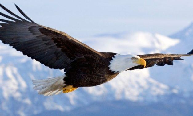 Volando como águilas